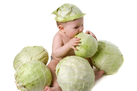 cabbage baby 450