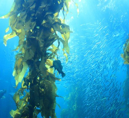 healthy benefits of seaweed