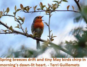 SpringTweetingBird