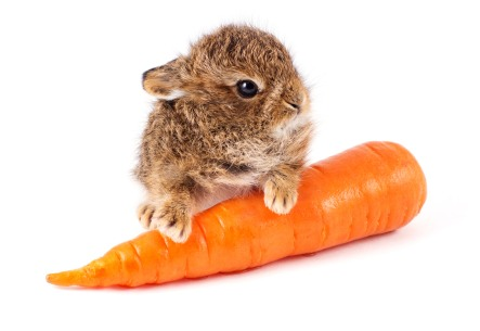 'the carrot test'