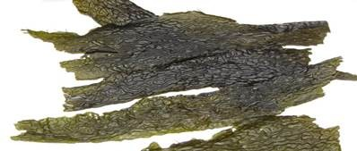 pacific kelp seaweed benefits